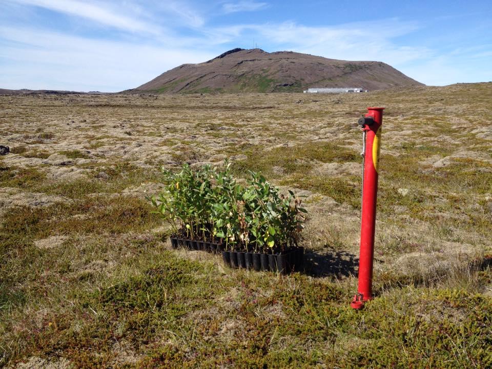 Aðalfundur skógræktarfélags Grindavíkur 15. maí